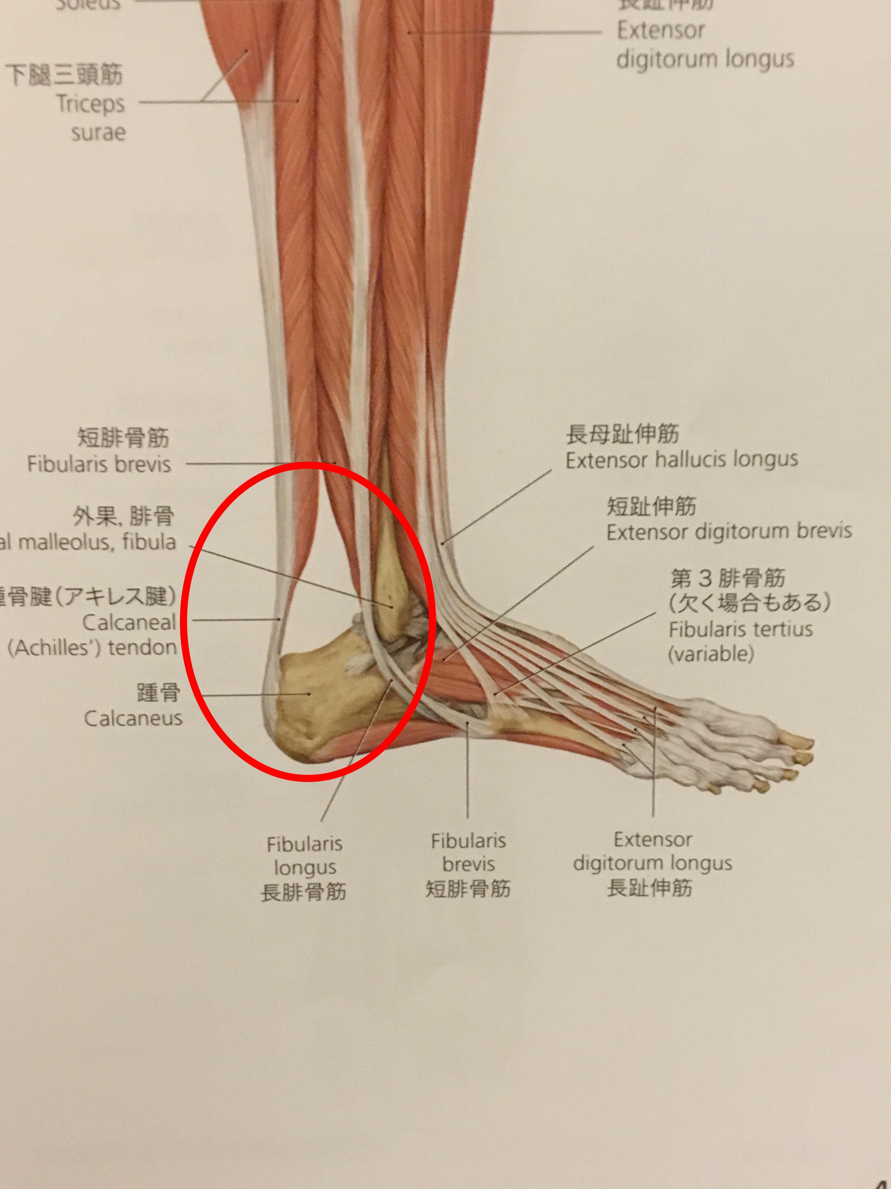 朝の1歩目に足裏が痛いっ!その症状名と対処方法とは?
